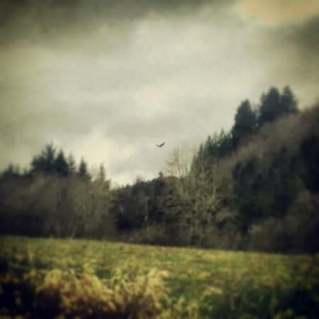 Red Hawk. ©2013 H a v e n